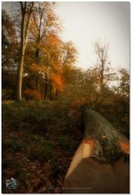 Abattage d'automne