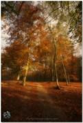 Circuit d'automne